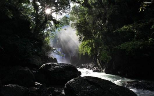 forest-stream-266-2560x1600