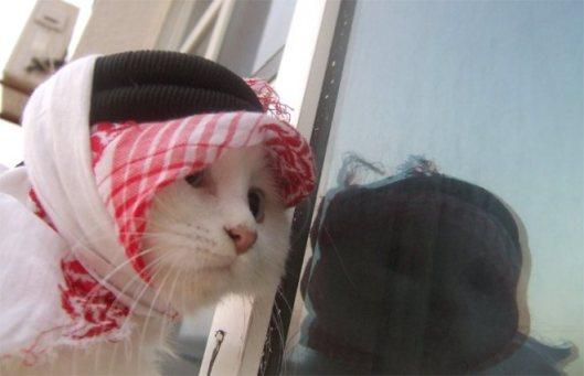 salam_cat